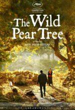The Wild Pear Tree - Films in Amsterdam Centrum – Films Amsterdam tijden – Films Amsterdam nu.
